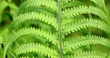 Plantes pour maigrir: 5 produits minceurs approuvés